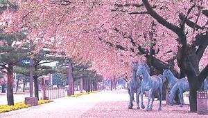Aomori_03_ph